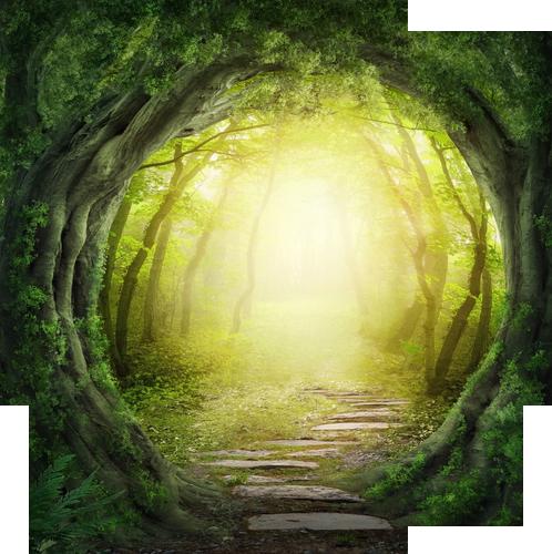 Rund bild på  en ljus skog